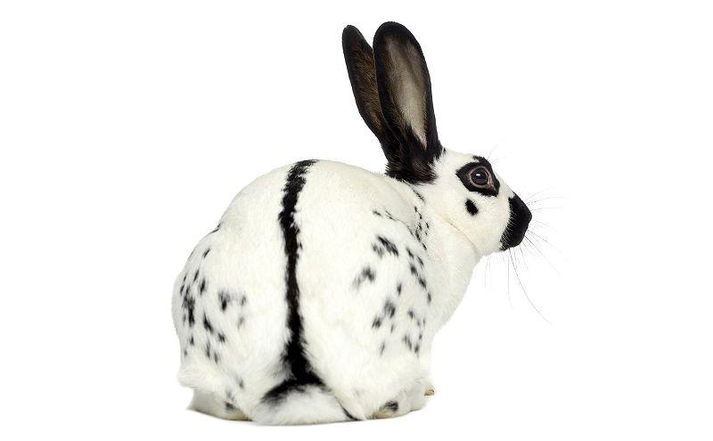 Кролики бабочки - главное фото