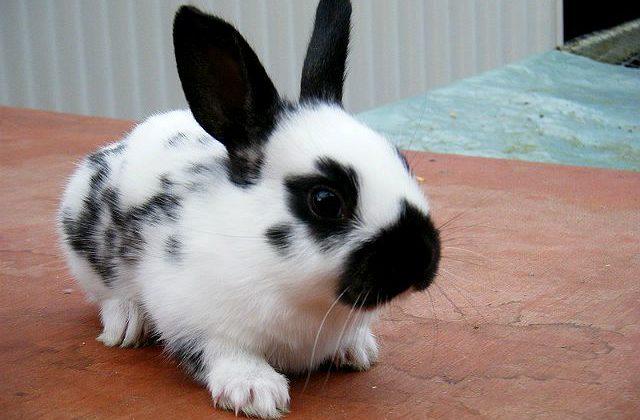 Крольчонок-бабочка