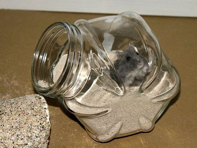 Купалка из песка для хомяка - выбор емкости