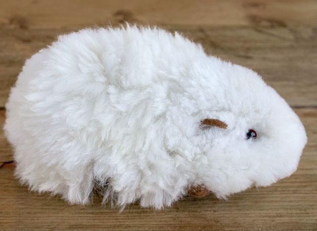 Морская свинка альпака белая