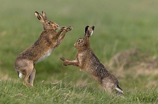 Характеристики зайца