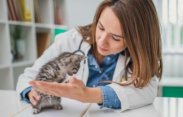 Понос у котенка - лечение у ветеринара
