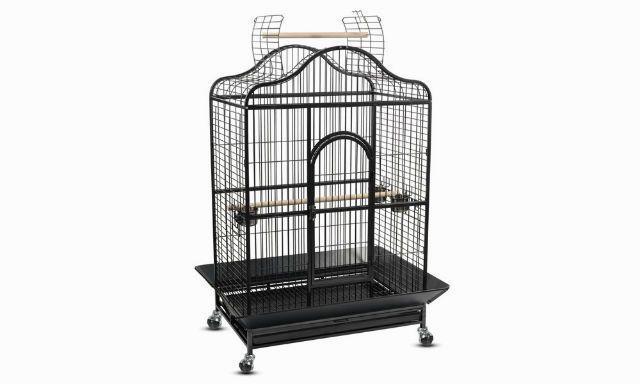 Попугай лорикет - обустройство клетки