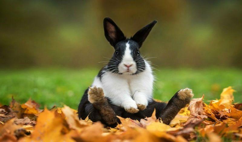 Породы кроликов - главное фото