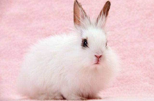 Маленький пушистый кролик