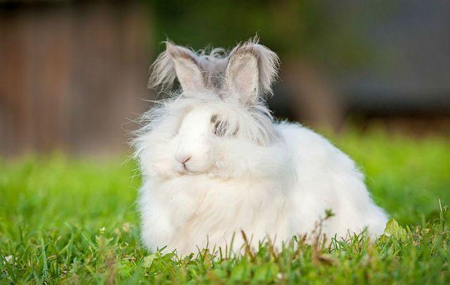 Пушистые кролики - главное фото