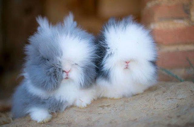 Пушистые крольчата
