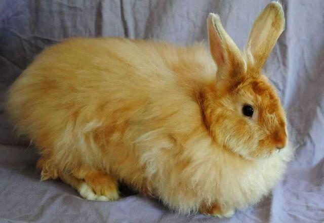 Пушистый кролик сатин