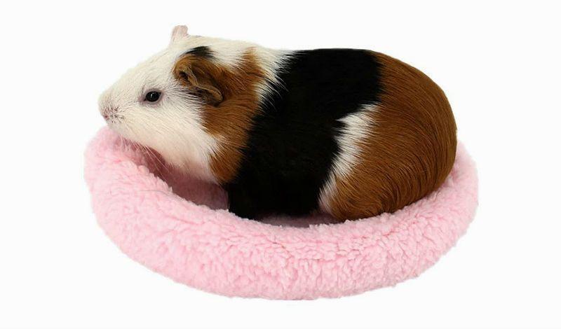 Сон у морских свинок - главное фото