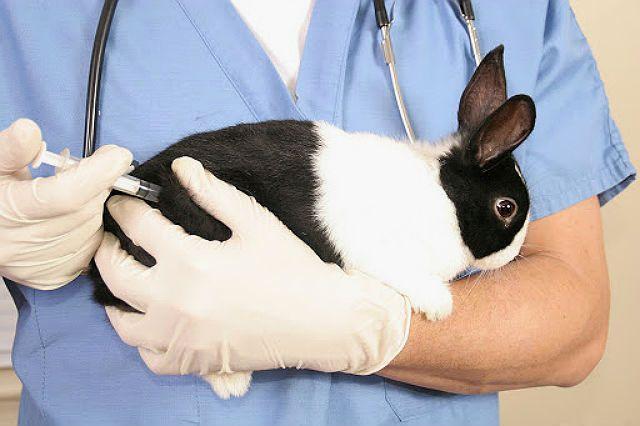 Стерилизация кролика - обезболивание