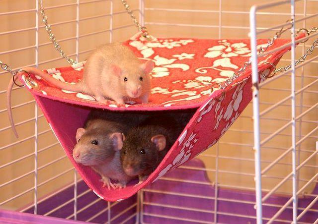 Тканевый гамак для декоративной крысы
