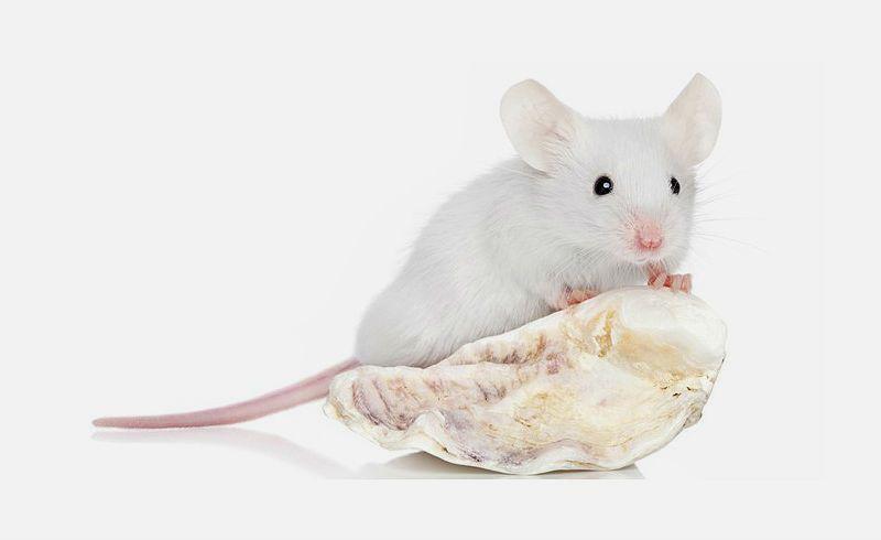 Имена для мышей - главное фото