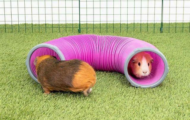 Как играть с морскими свинками - туннель