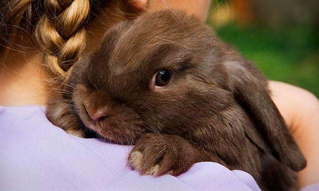Как стричь когти кролику - главное фото