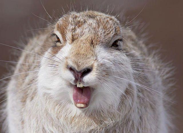 Какими звуками общаются зайцы - визжание