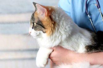 Кошачий лишай у человека - главное фото