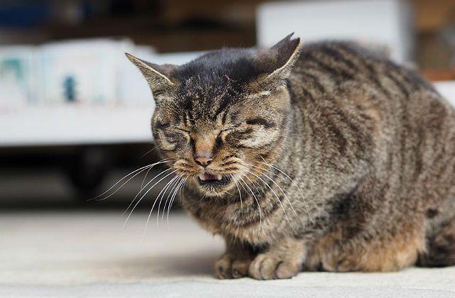 Кошка хрипит и часто дышит