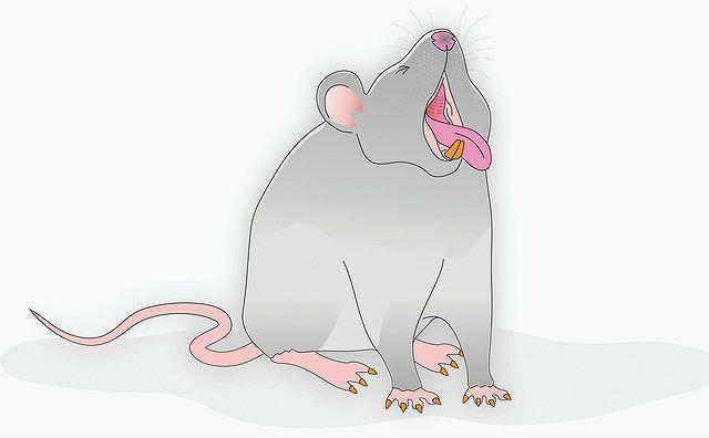 Крысиный язык - кашель и чихание