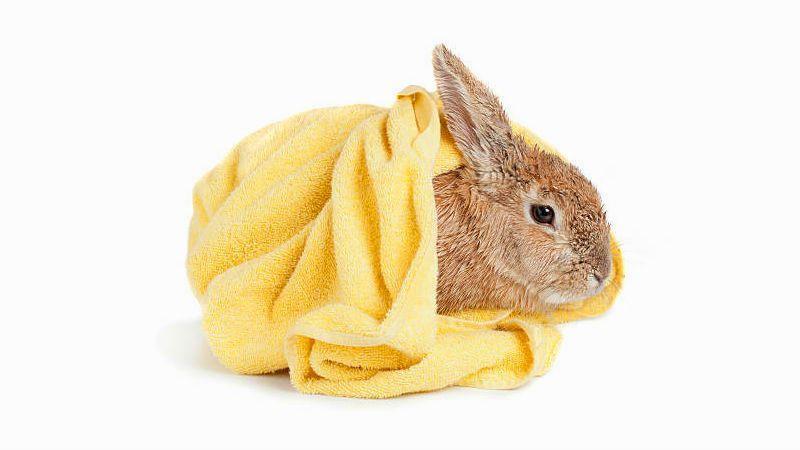 Купание декоративных кроликов - главное фото