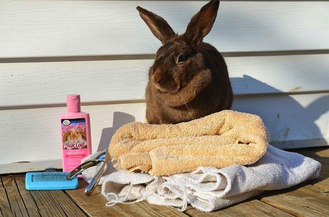 Купание декоративных кроликов - средства для мытья