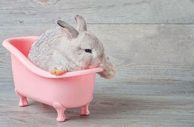 Купание декоративных кроликов в тазике