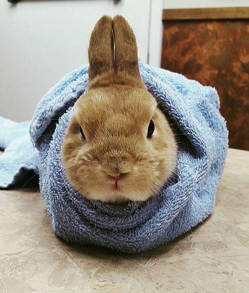 Кролик в полотенце