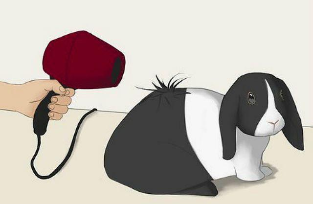 Сушка феном кролика