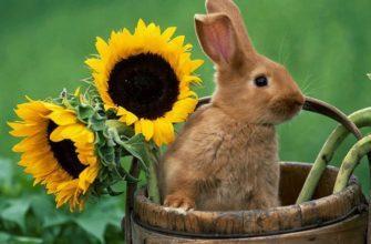 Семечки в рационе кролика - главное фото
