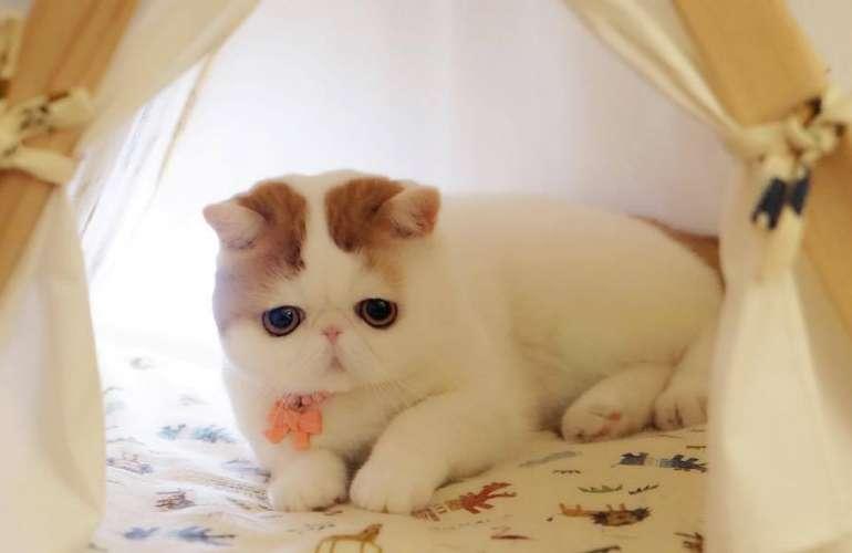 кот Снупи на фото
