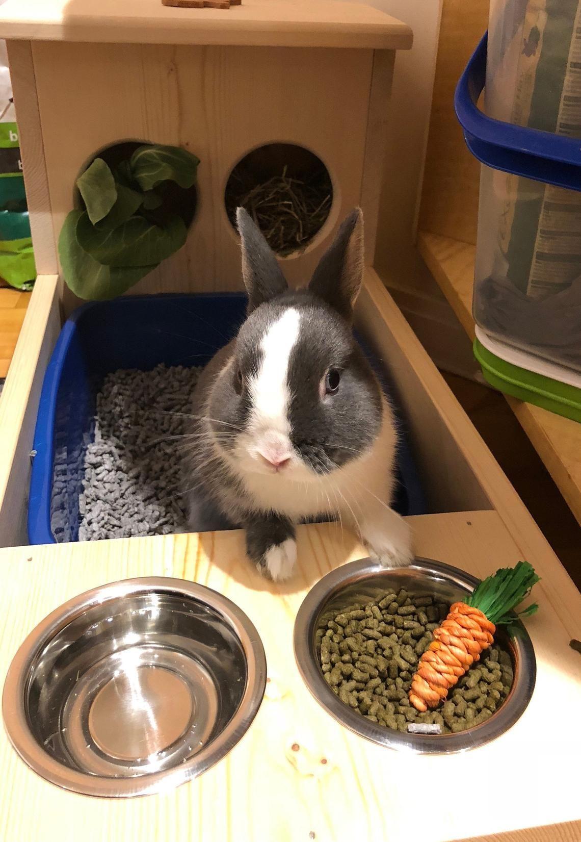 кролик возле мисок