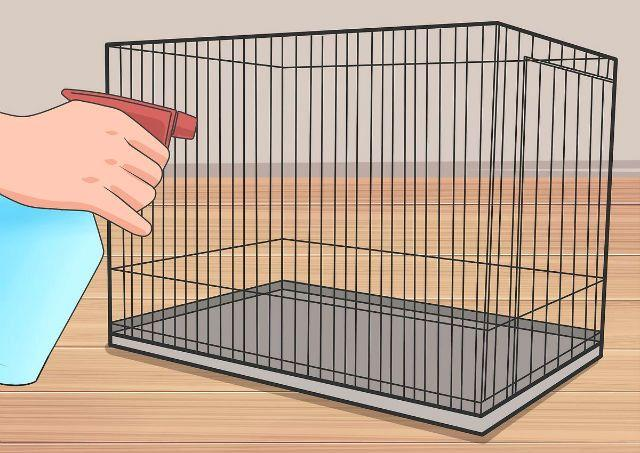 Хомяк грызет клетку - как отучить
