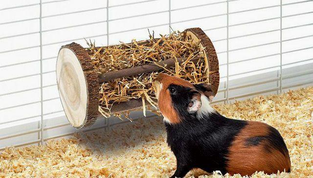 Игрушки для морской свинки - сенник