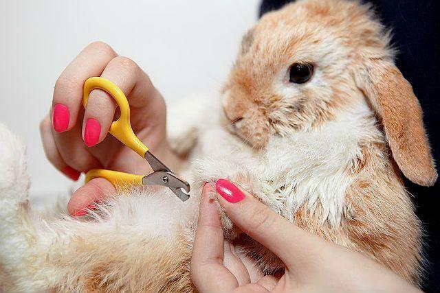 Как стричь когти кролику - фиксация