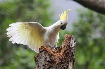 Какаду - главное фото