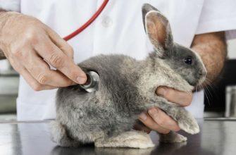 Кролик тяжело дышит - главное фото
