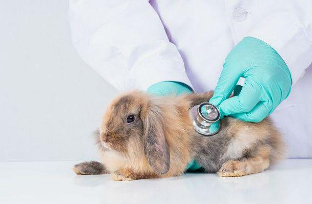 Бронхит у кролика - помощь ветеринара