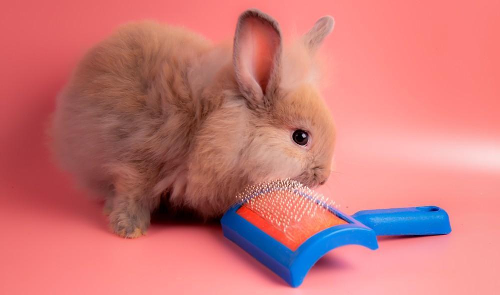 кролик с расческой
