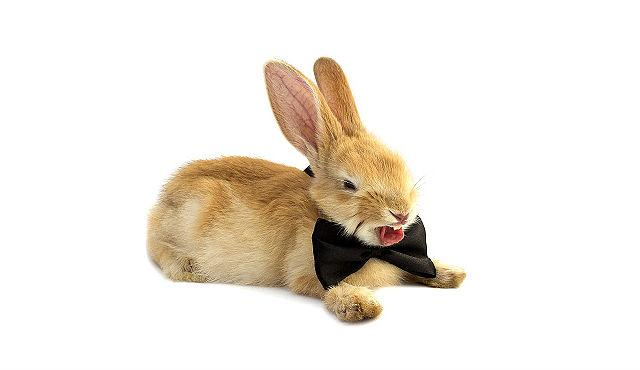 Декоративный кролик чихает - стресс
