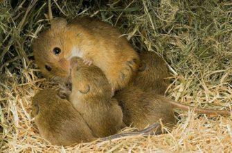 Детеныши мышей - главное фото