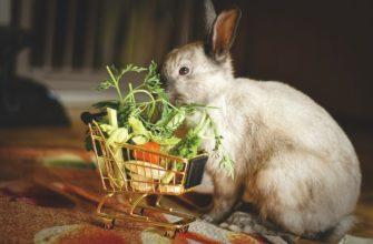 кролик с тележкой