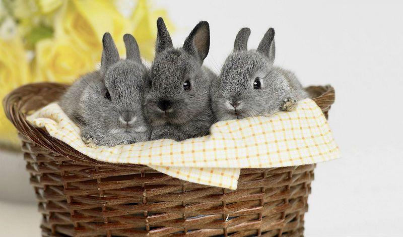 Как ухаживать за новорожденными кроликами - главное фото