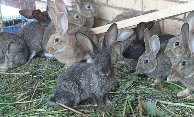 Кролики - молодняк