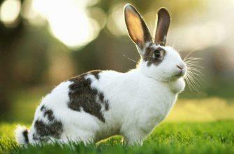 Какие опухоли бывают у кроликов - главное фото