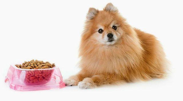 Калькулятор корма для собак - главное фото