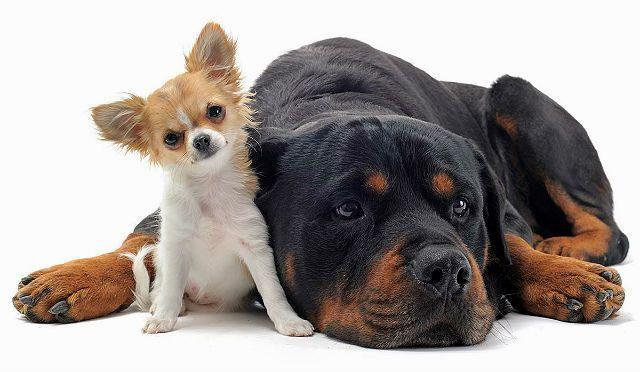 Калькулятор корма для маленьких и больших собак