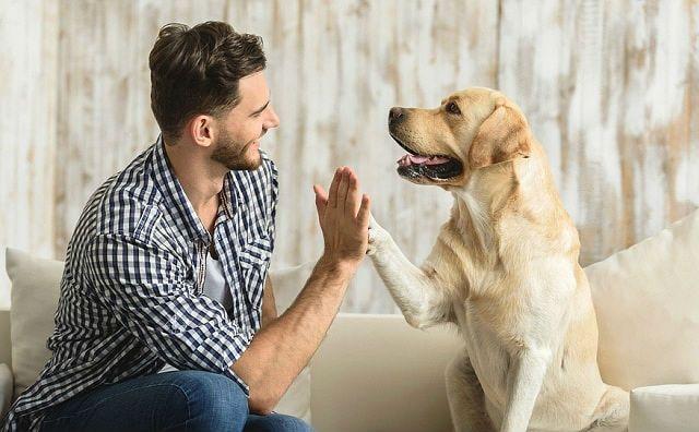 Калькулятор возраста собаки - главное фото