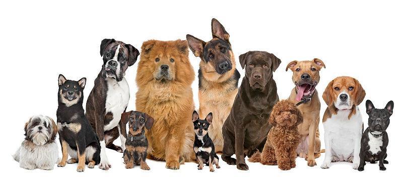 Особенности подсчета возраста собак по человеческим меркам