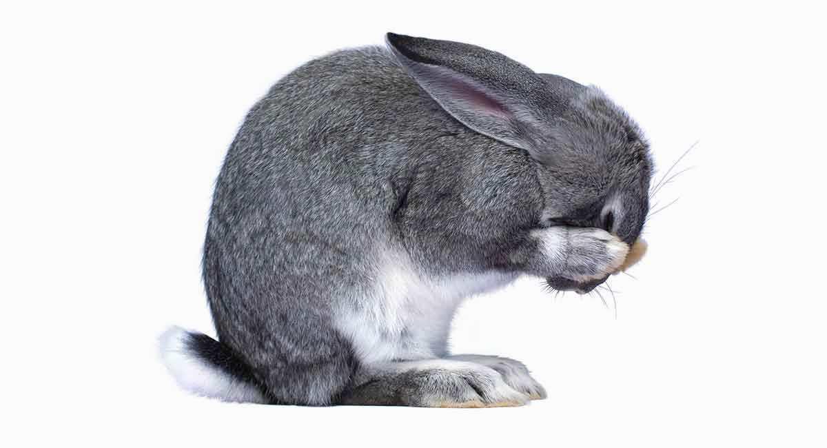 Кролик не какает - главное фото