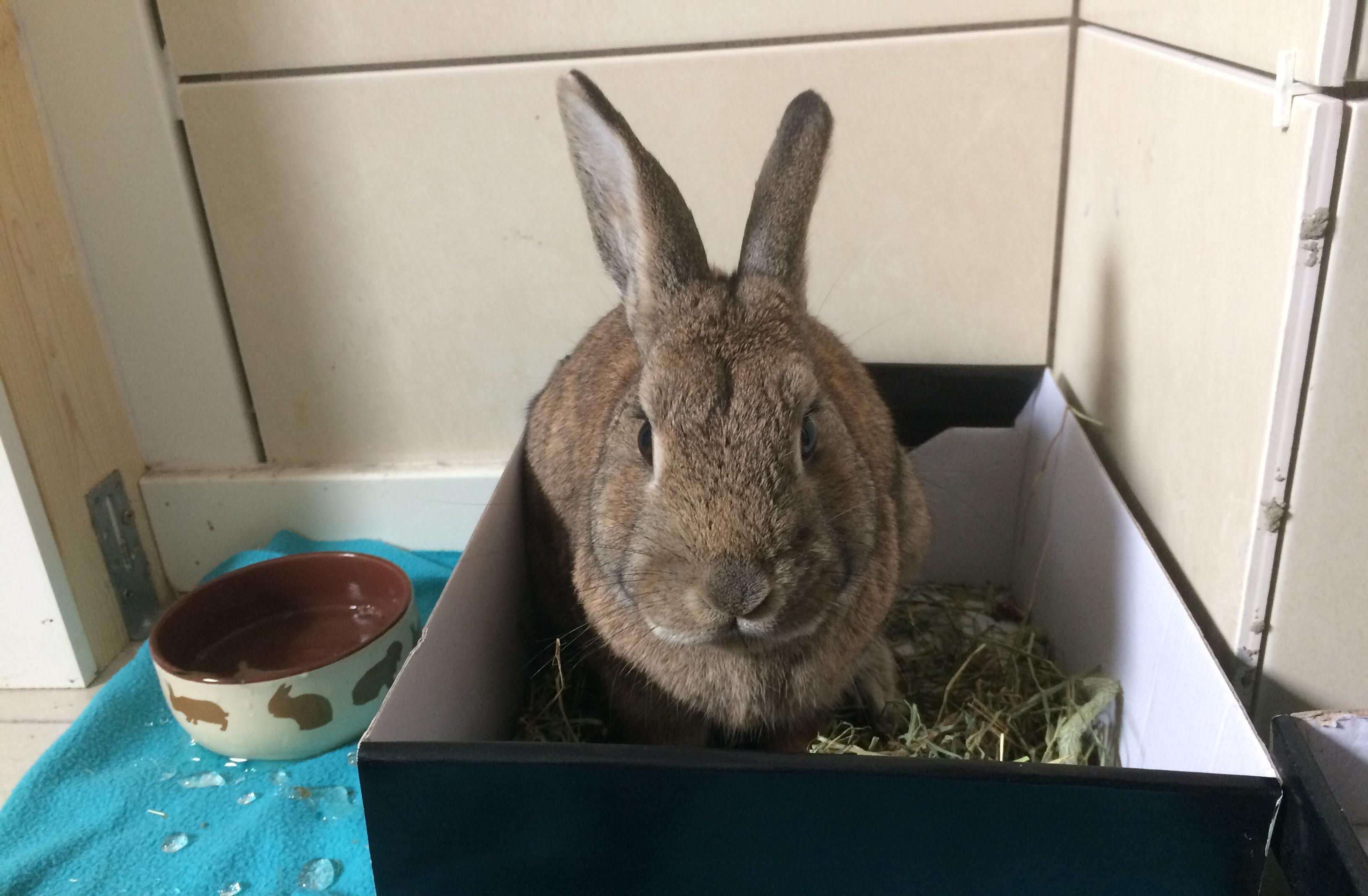 Причины запора у кролика
