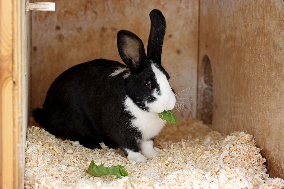 Профилактика запоров у кроликов